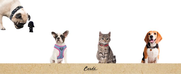 mascotas_accesorios