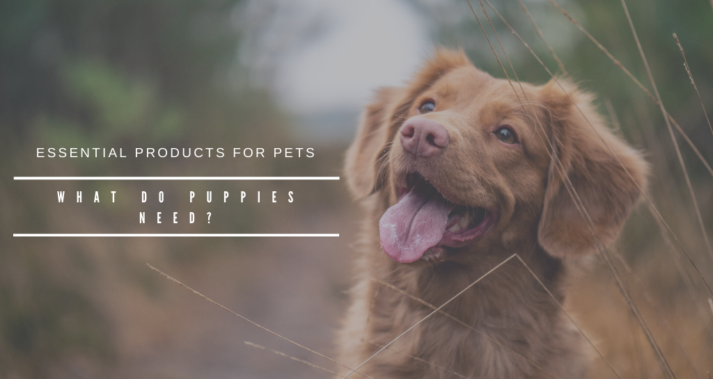 Essential products for pets. what do puppies need?